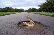Innovation -Crocodile-on-the-road